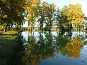Burgundy Reflections