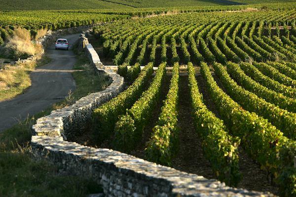 Качество бургундских вин: что определяет качество и вкус бургундского вина, на что ориентироваться при выборе и покупке бургундского вина, лучшие вина из Бургундии, бургундские вина, французские вина, как выбрать хорошее французское вино, как выбрать хорошее вино, что влияет на качество вина, франция, путеводитель по Франции, Бургундия, путеводитель по Бургундии