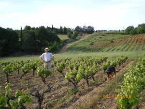 Organic Wines in Provence