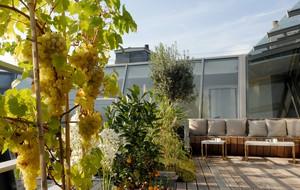 39V, Paris, Greenhouse, London & Michelin Japan 2011 Buzz