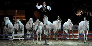 The Annual Paris Horse Show 2013 Edition – Nov 30 to Dec 8
