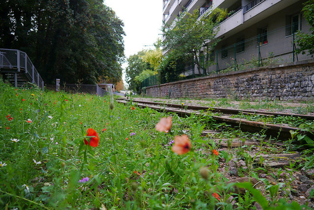 Poppies on the Petite Ceinture by Groume/Flickr