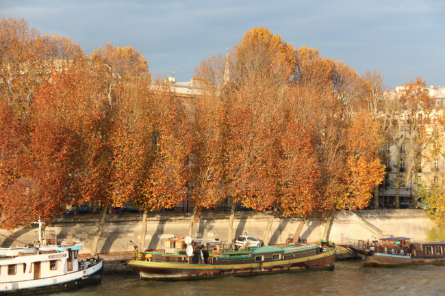 Photo Essay: Autumn's Gorgeous Fall Foliage in Paris