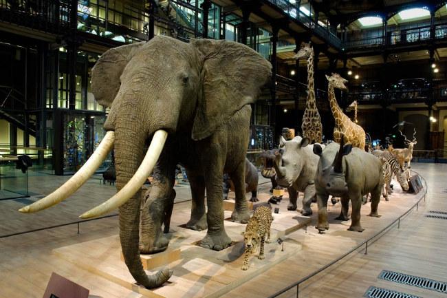 Grande Galerie de l'Évolution