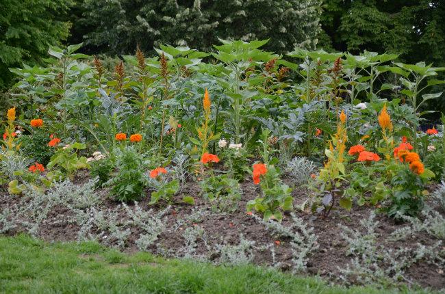 flowers in Parc Montsouris