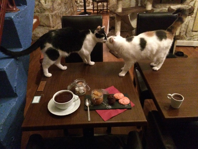 Le café des chats, Paris
