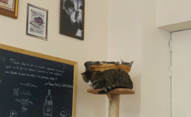 Relaxing cats Le café des chats.