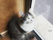 A cat at Le café des chats