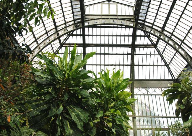 Jardin des Plantes greenhouses