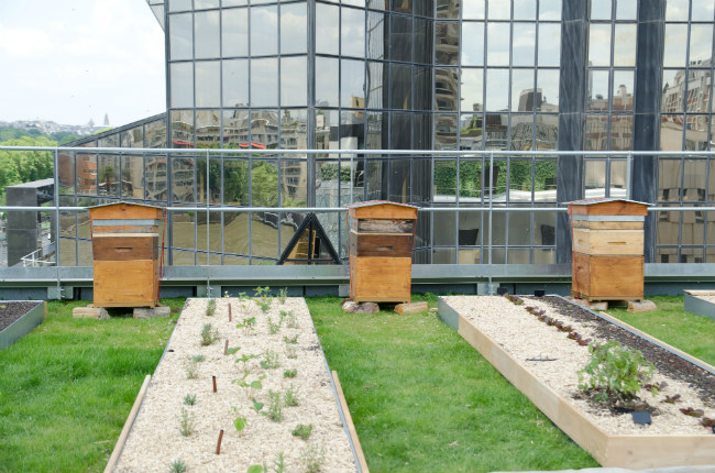 The rooftop garden at Le Cordon Bleu's new campus