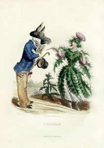 "Illustration ""Chardon"" (thistle) from ""Fleurs Animées"" by the french artist Grandville (1803-1847) / Public Domain"