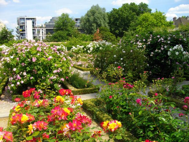 Roses in the Jardin Yitzhak Rabin