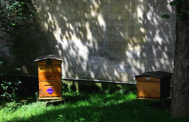 The beehives at the Saint James Paris