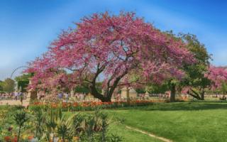 Fête des Jardins 2021