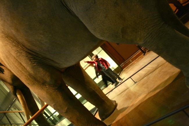 Exploring the Natural History Museum in Paris.