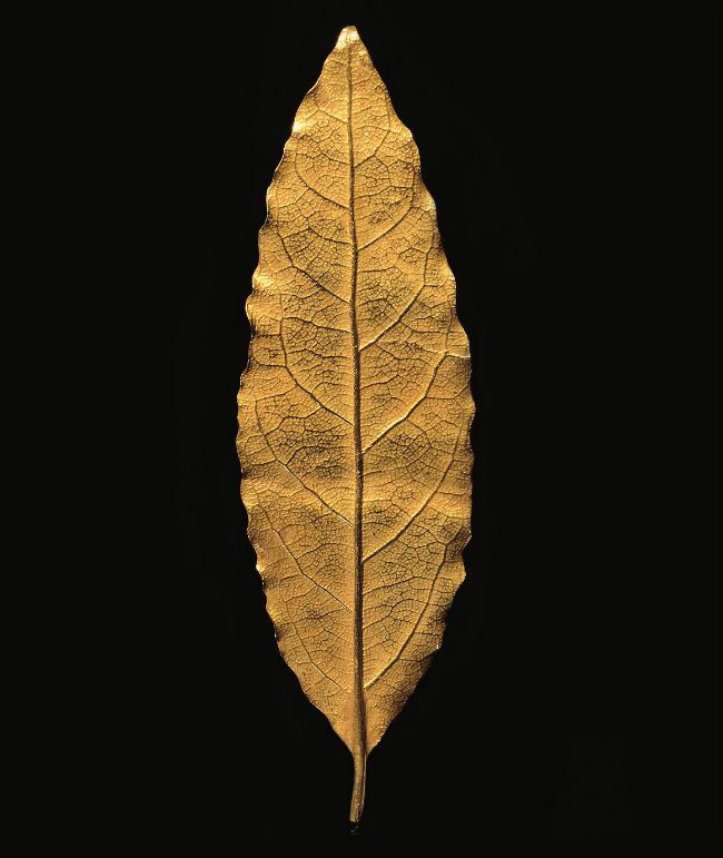 For Sale: The Lost Gold Leaf Symbolizing Napoleon's Coronation