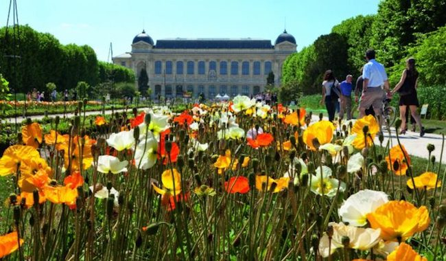 Your Everything Guide to the Must-See Gardens of Paris
