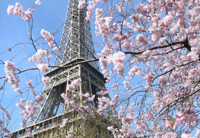 The Best Places to See the Cherry Blossoms in Paris