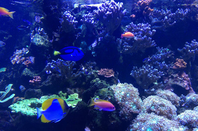 Kids in Paris: Explore the Tropical Aquarium at the Palais de la Porte Dorée