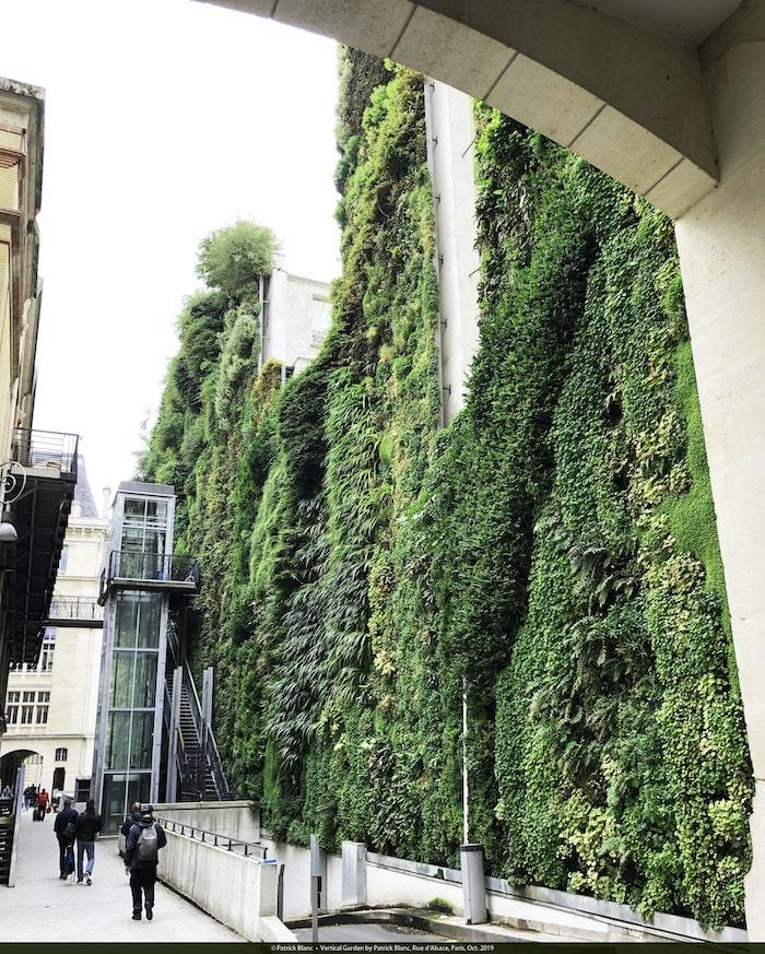 Vertical garden, Patrick Blanc