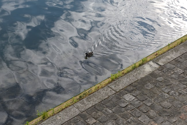 Duck swimming on Paris river