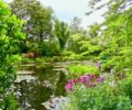 The water lilies pond