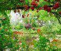 Garden surrounding the pond