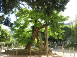 Arbres Remarquables: Where to Find the Great Trees...