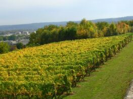 Day Trip: Taste the Countryside Just Outside Paris...