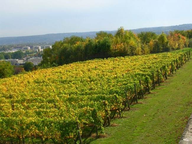 Day Trip: Taste the Countryside Just Outside Paris