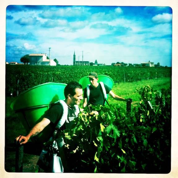 Pomerol harvest. Photo ©Clay McLachlan ©claypix 2011